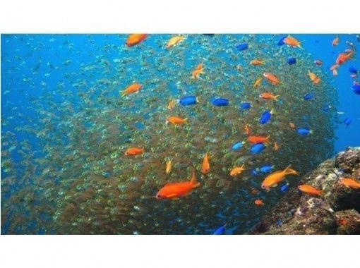 【静岡・西伊豆】安心・安全なマンツーマン指導!水中写真プレゼント!体験ダイビング(2回コース)の紹介画像
