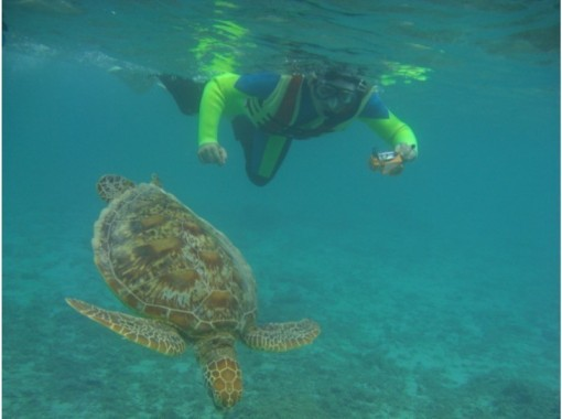【鹿児島・奄美大島】送迎付き!ウミガメ遭遇率98%シュノーケリングとマングローブカヌー(1日コース)の紹介画像