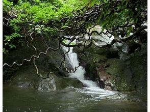 サンゴとヤドカリ(SANGO TO YADOKARI)の画像