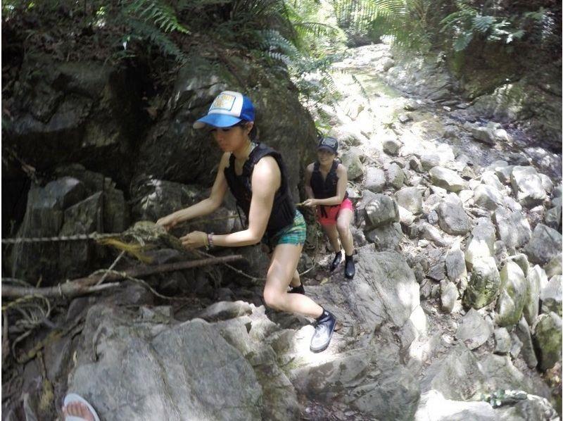 【沖縄・大宜味村】ター滝リバートレッキング(半日ツアー)の紹介画像