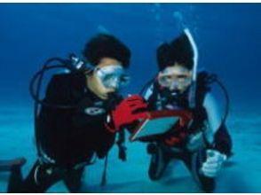 館山ダイビングサービスSARA(Diving Service SARA)の画像