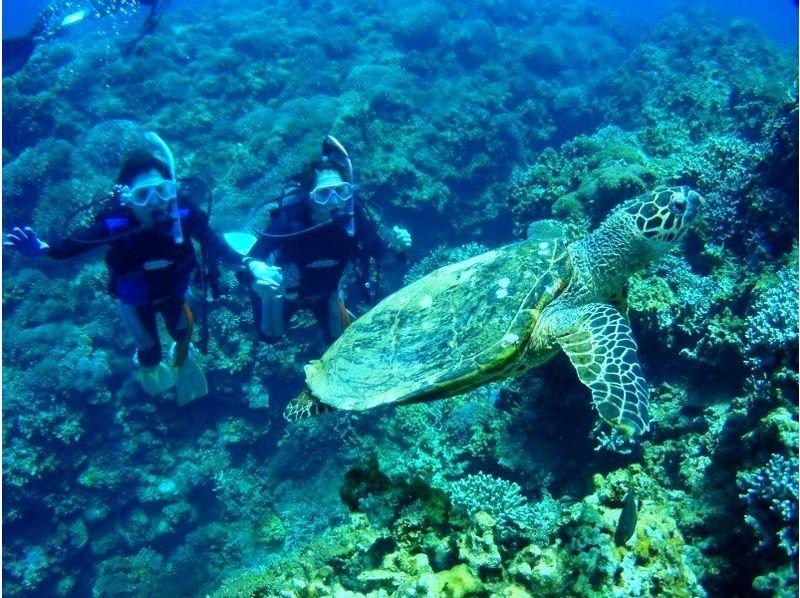 【沖縄・慶良間】ケラマ諸島体験ダイビング≪ライセンス不要≫の紹介画像