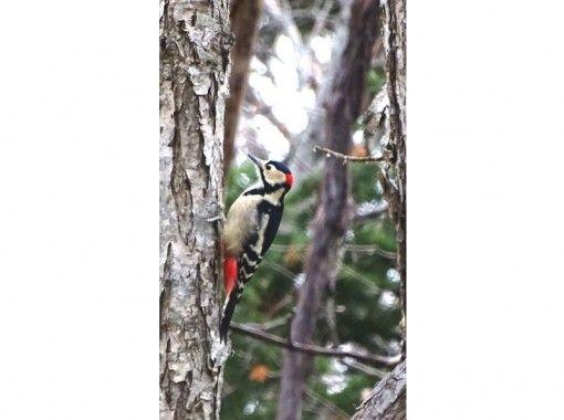 ☆知床世界自然遺産☆フレペの滝 散策☆お子様から高齢の方も楽しめるお手軽コース
