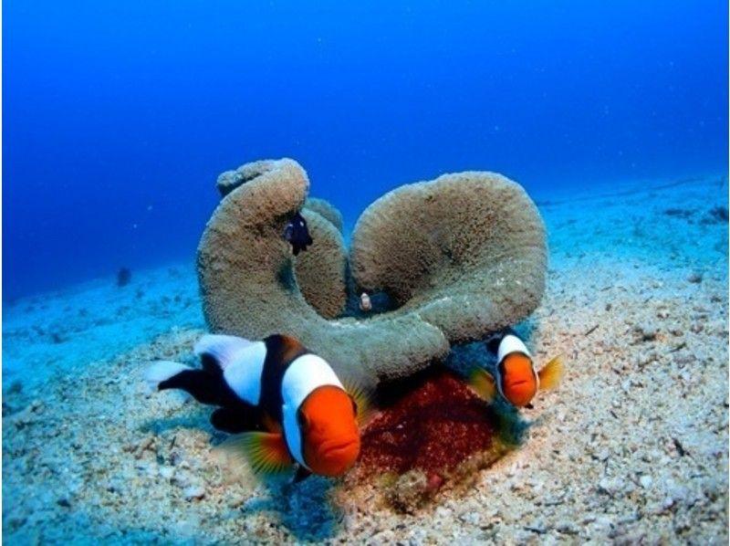 【沖縄県恩納村】熱帯魚体験ダイビング(初心者歓迎☆ライセンス[Cカード]不要)の紹介画像