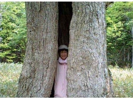 【北海道・知床】世界自然遺産~ポンホロの森を散策!けもの道をたどる!(約2km・2時間・中級者向き)の紹介画像