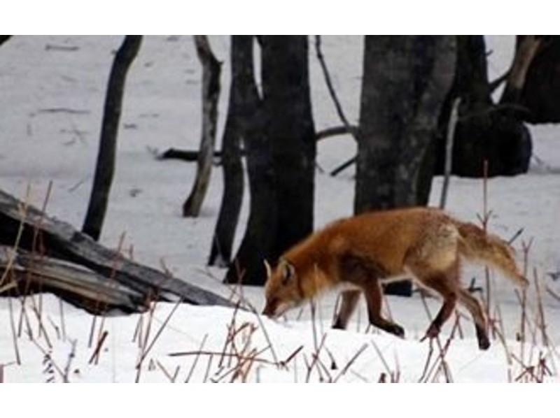 【北海道・知床】エゾシカや野鳥を観察!スノートレッキングの紹介画像