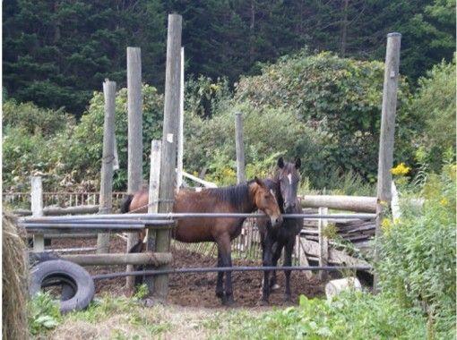 【北海道・北広島】体験乗馬(約30分)