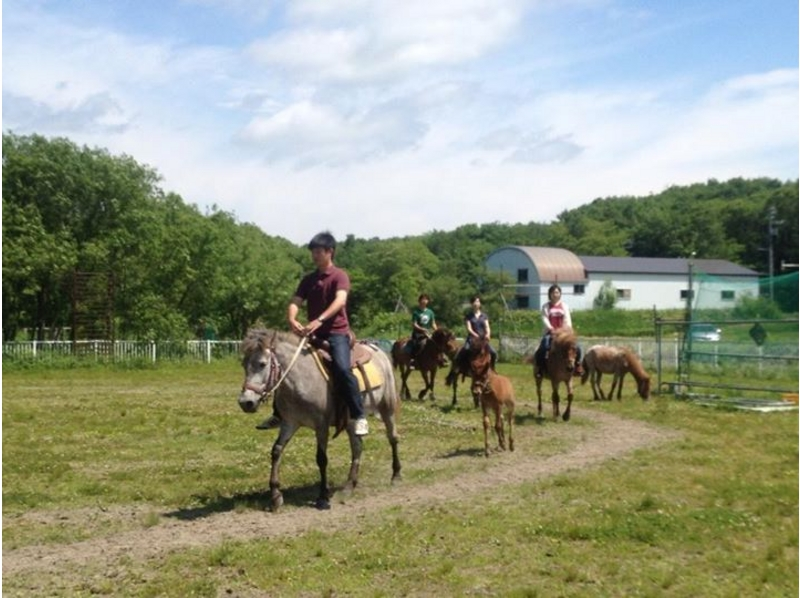 [Hokkaido Kitahiroshima] introduction image of horse trekking (outside the square 60 per minute)