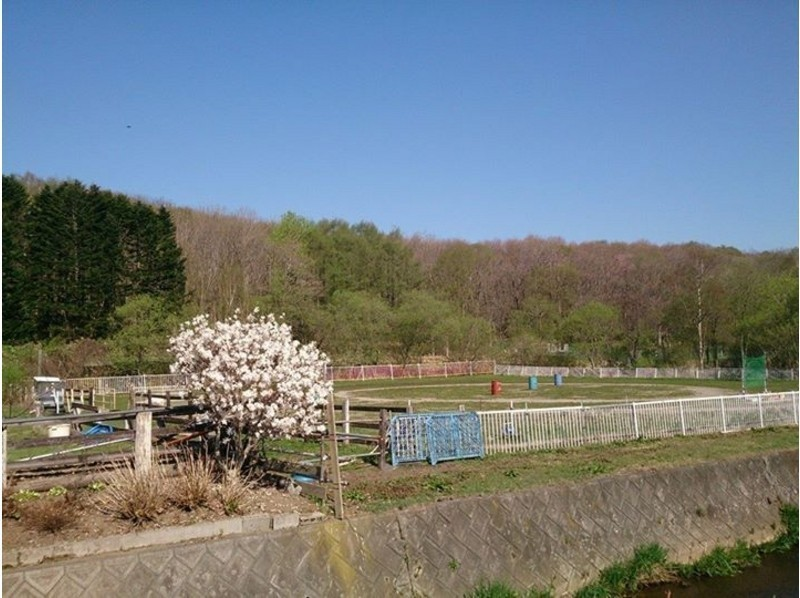 [Hokkaido Kitahiroshima] introduction image of horse trekking (outside the square 60 per minute)