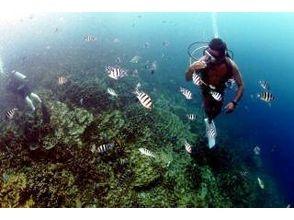EiEi Diving Shop(エイエイダイビングショップ)の画像