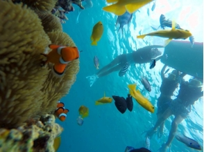 サマーリゾート沖縄 (Summer Resort Okinawa)の画像