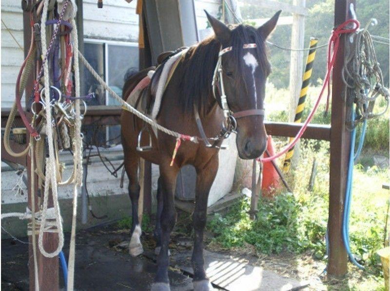 【北海道・北広島】乗馬体験(引き馬:馬場内2周)の紹介画像