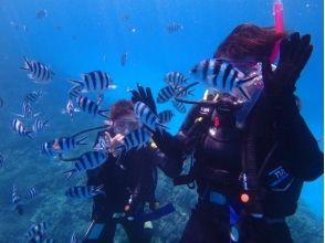 海の教室 潜水士夫婦の画像