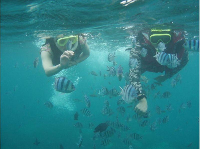 【沖縄・国頭村】やんばる国立公園に指定された沖縄本島北部で無人島へ行こう!SUP+シュノーケリングの紹介画像