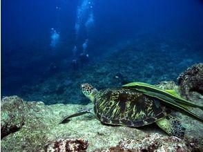 沖縄ダイビングサービスTOYBOX(トイボックス)の画像