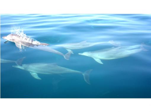 【熊本・天草】野生イルカに会いに行こう!高確率でイルカに出会える!