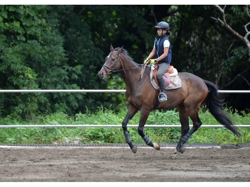 【茨城・守谷】マンツーマンで丁寧に指導します!体験乗馬(1回コース)の紹介画像