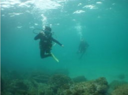 [Nagasaki Sasebo] experience diving (beginners welcome ☆ unnecessary license)の紹介画像