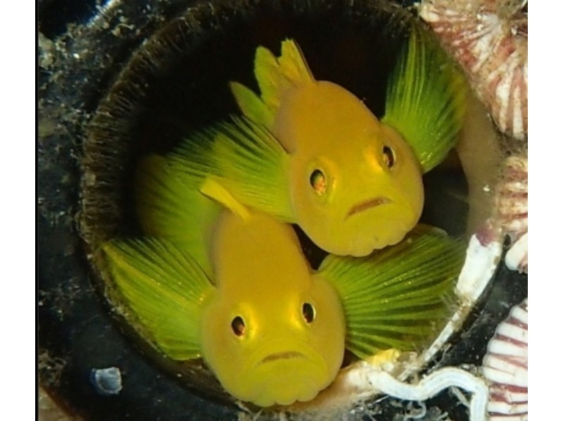 [Nagasaki Sasebo] experience diving (beginners welcome ☆ unnecessary  license)