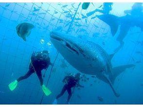 Dive Center Isles Okinawa(ダイブセンターアイルズオキナワ)の画像