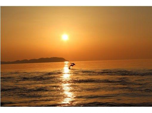 【熊本県・天草】野生のイルカに出会う癒し旅!船に乗ってイルカウォッチング