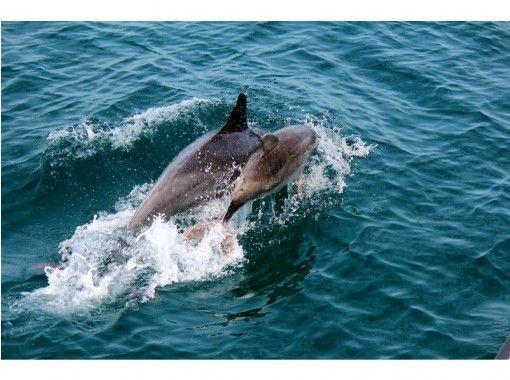 【熊本県・天草】野生のイルカに出会う癒し旅~船に乗ってイルカウォッチング!