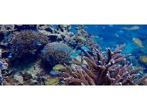 【沖縄・古宇利島】1グループ貸切!体験ダイビング!の魅力の説明画像