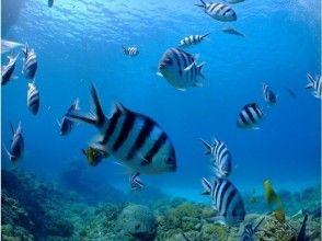 プランの魅力 たくさんのお魚☆ の画像