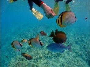 プランの魅力 Feeding tropical fish の画像