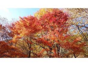 [Yamanashi Fujiyoshida] Yamanashi hyakumeizan Sants Togeyama (1786m) trekking attractive description image