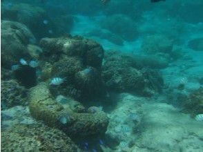 プランの魅力 您可以遇见各种各样的鱼! の画像
