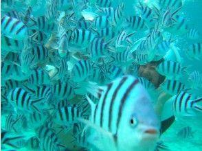 【沖縄・恩納村】ヘルメットが大きいから視界が広い!海底を自由に散策マリンウォーク!の魅力の説明画像