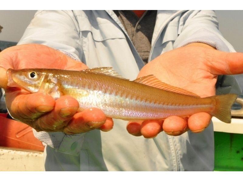 プランの魅力 パワフルな魚 の画像