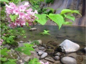 プランの魅力 A fascinating mountain stream with colorful makeup in spring, summer, autumn の画像