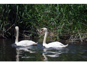 プランの魅力 A swan welcomes you! の画像