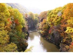 プランの魅力 秋天的树叶被包围的全景 の画像
