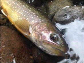 【青森・八戸】渓流の女王・ヤマメに会いにいく!ときめきの川釣り体験☆半日コース(実釣4時間)の魅力の説明画像