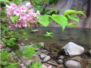 プランの魅力 A beautiful view of Oirase that changes its expression every season. の画像