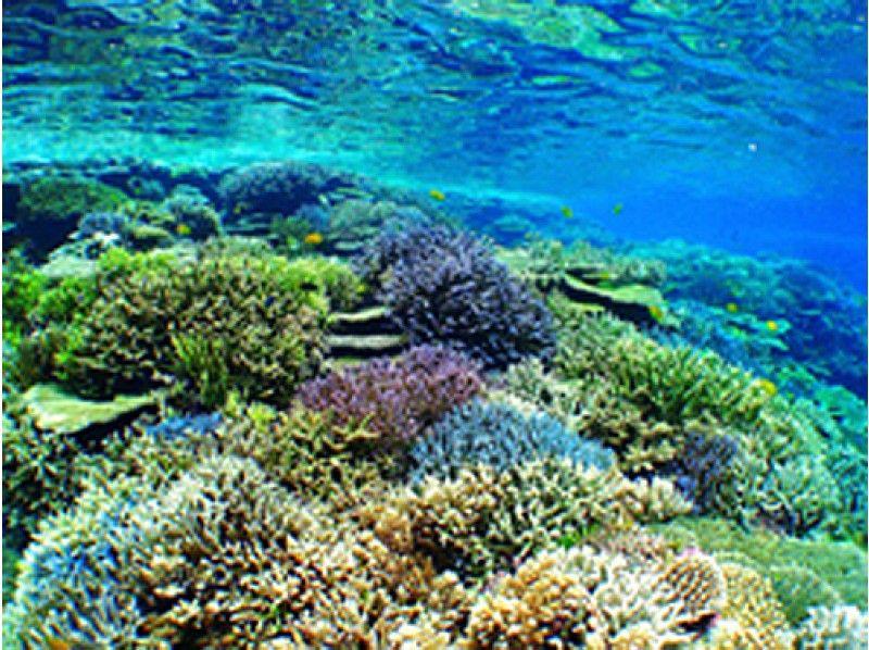プランの魅力 世界に誇る、石垣島の色とりどりの珊瑚礁 の画像