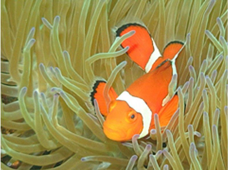 プランの魅力 石垣北部の海でどんな生き物に出逢えるのかな? の画像