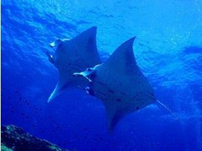 【沖縄・石垣島】遊びの幅を広げてもっと広い水中世界を見に行こう!ダイビングアドバンスコース(2日間)の魅力の説明画像