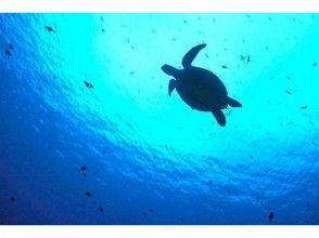 【仙台発・伊豆】ダイバーになろう!2泊3日のオープンウォーターダイバー講習(ライセンス講習)の魅力の説明画像