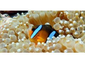 プランの魅力 From sea anemones の画像