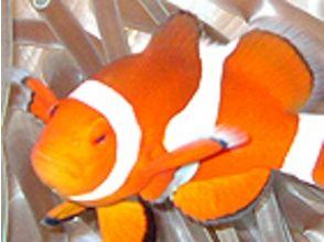 【沖縄・石垣島】初心者&入門者大歓迎!シュノーケリング体験の魅力の説明画像