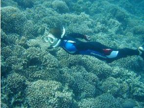 【沖縄・西表島】サンゴ礁でできた奇跡の島、バラス島でシュノーケリング(半日コース or 1日コース)の魅力の説明画像