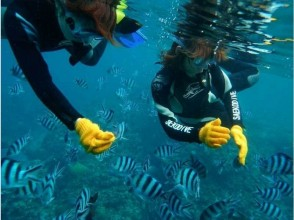 [Okinawa Onna] full charter! Blue cave snorkeling! Photography and with SD card gift! Charm of description image of
