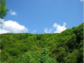 プランの魅力 Bright green even in midsummer の画像