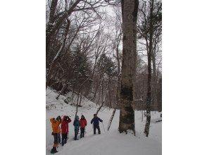 プランの魅力 手つかずの大自然の森 の画像