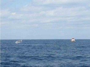 【沖縄・座間味】クジラを近くで見てみよう!ホエールウォッチング(Aコース)の魅力の説明画像