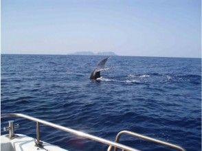 【沖縄・座間味】渡名喜、座間味を周遊!クジラを近くで見てみよう!ホエールウォッチング(Bコース)の魅力の説明画像